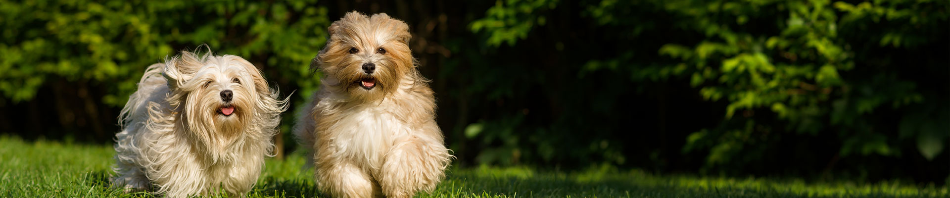 dog boarding rates - The Strutting Pooch