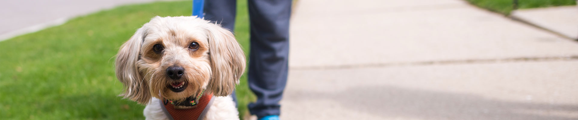Dog Services Near Me Rates - The Strutting Pooch